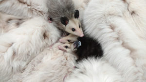 Fur Fashion, The Best Way to Give It Back | AllegraNoir.com